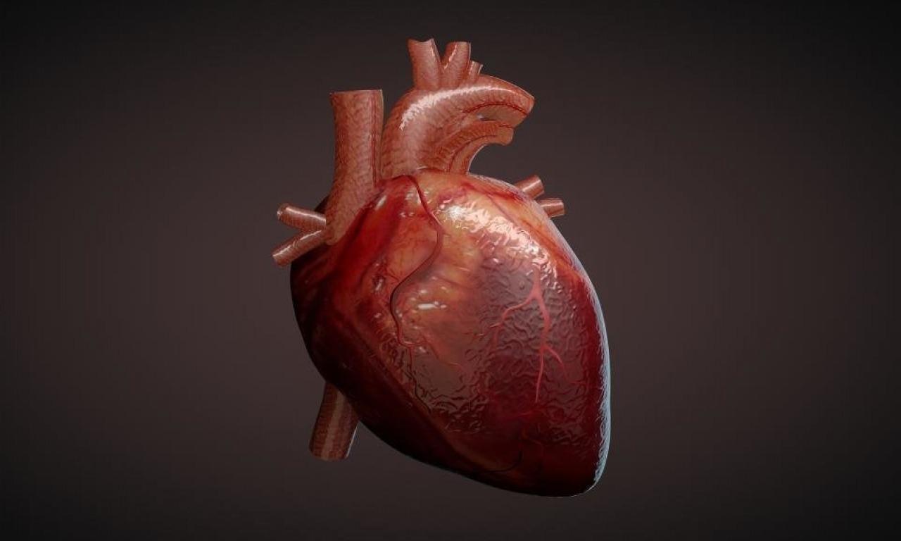 Storia del cuore
