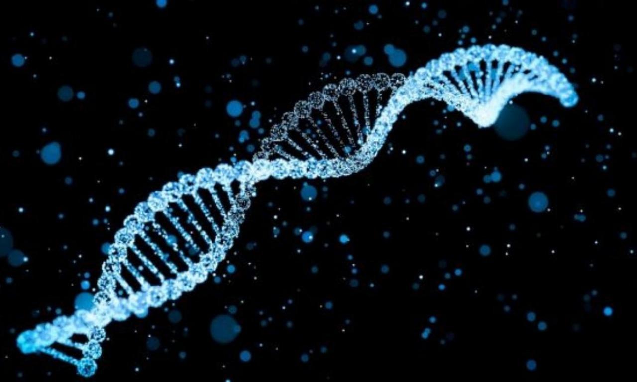 Il libro del DNA