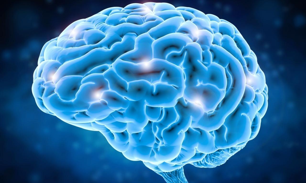 In diretta dal cervello