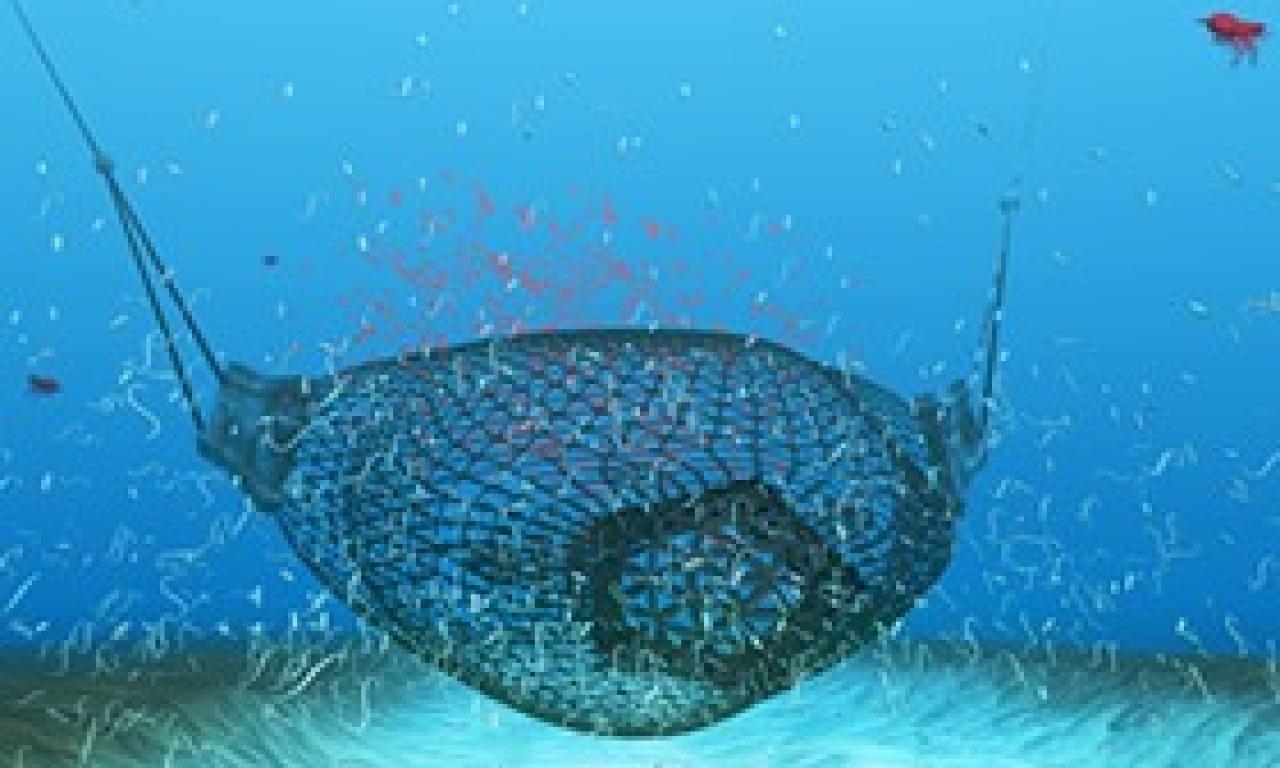 Quale futuro per gli oceani