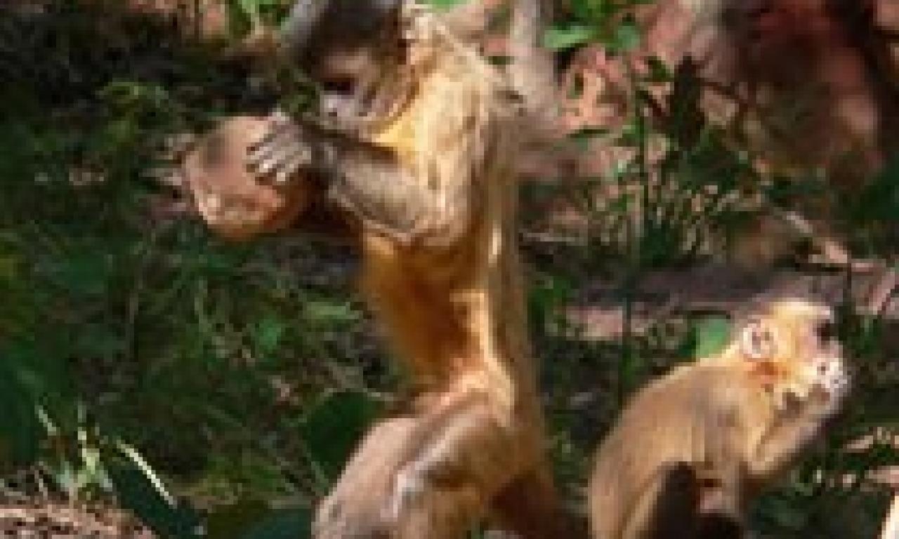 Scimmie come noi