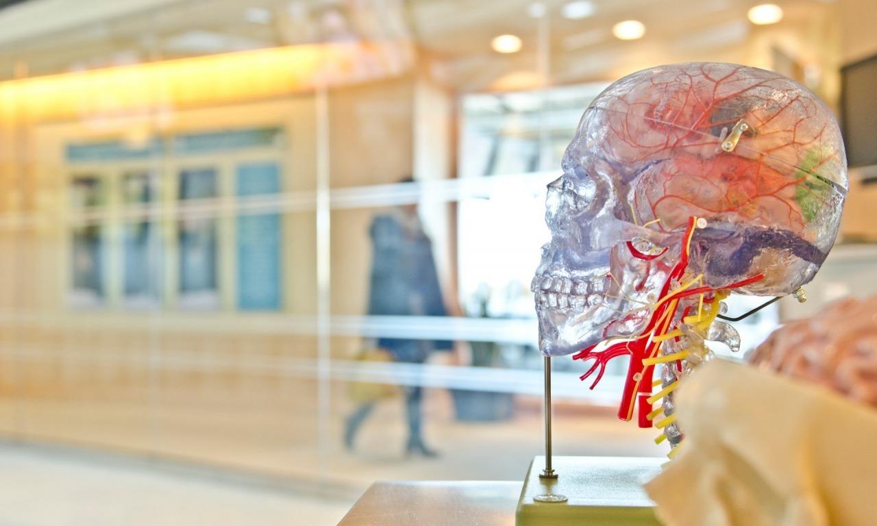 Breve viaggio intorno al cervello