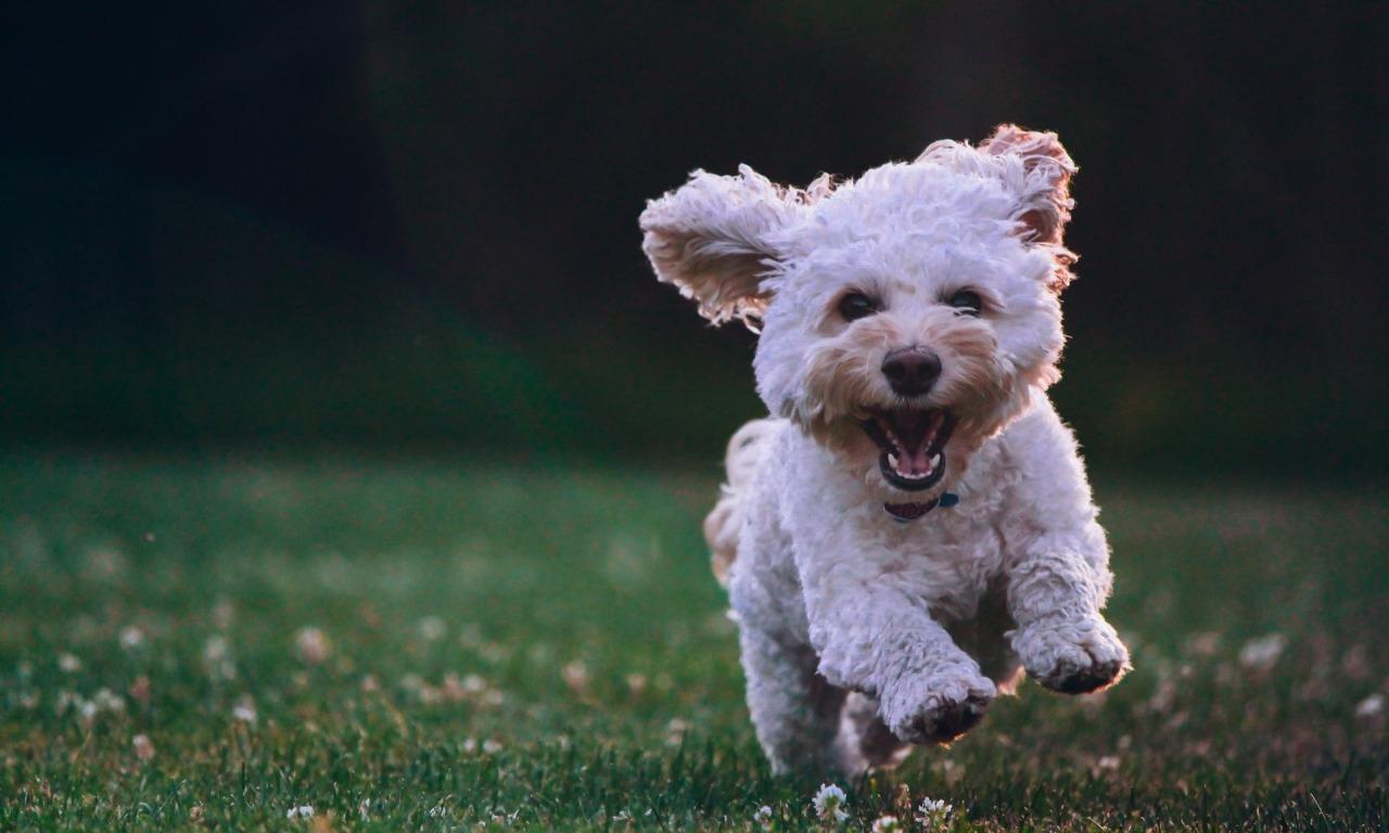 Una felicità bestiale