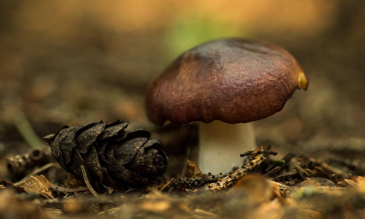 Funghi. Dal laboratorio alla borsa della spesa