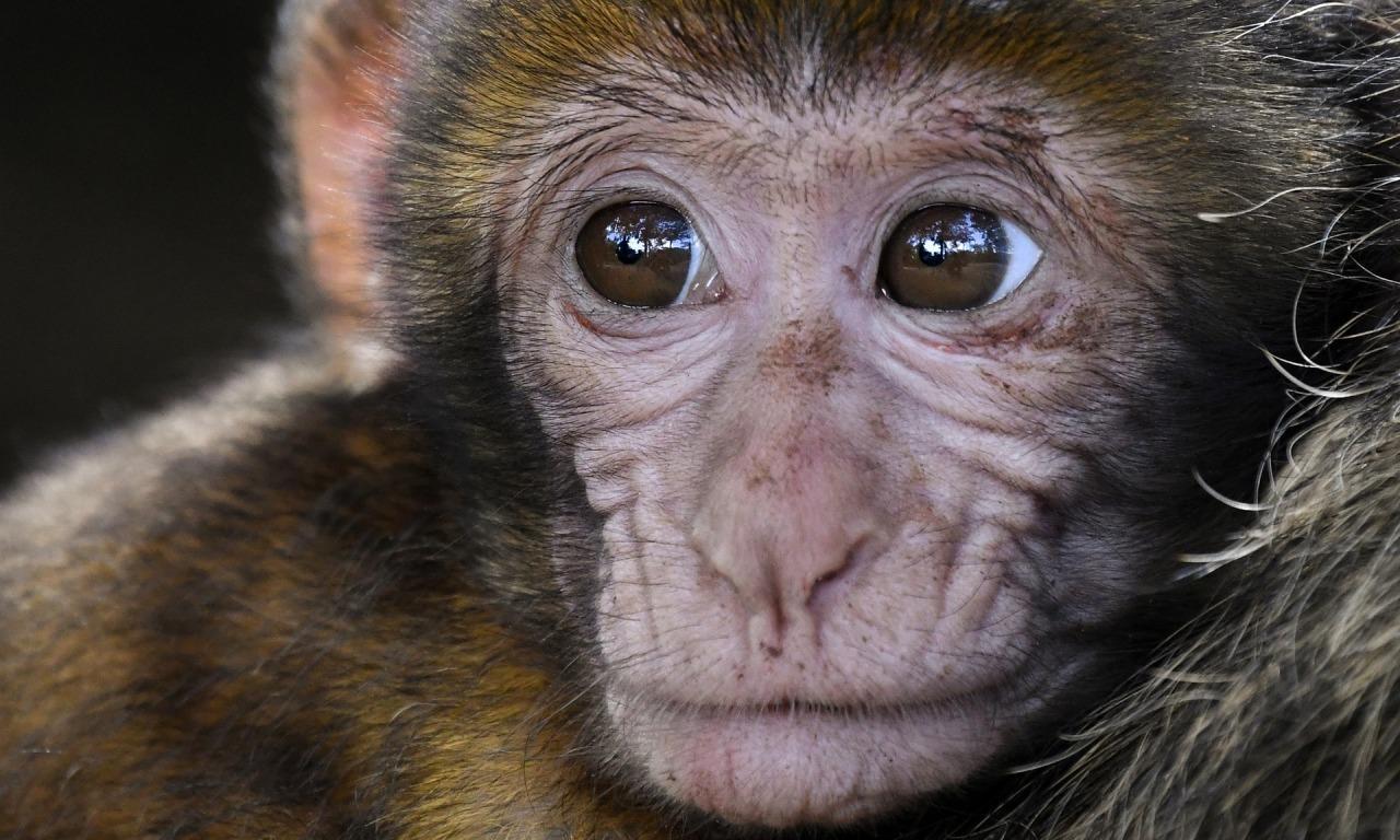 SPECIALE SCUOLE - A tavola con le scimmie