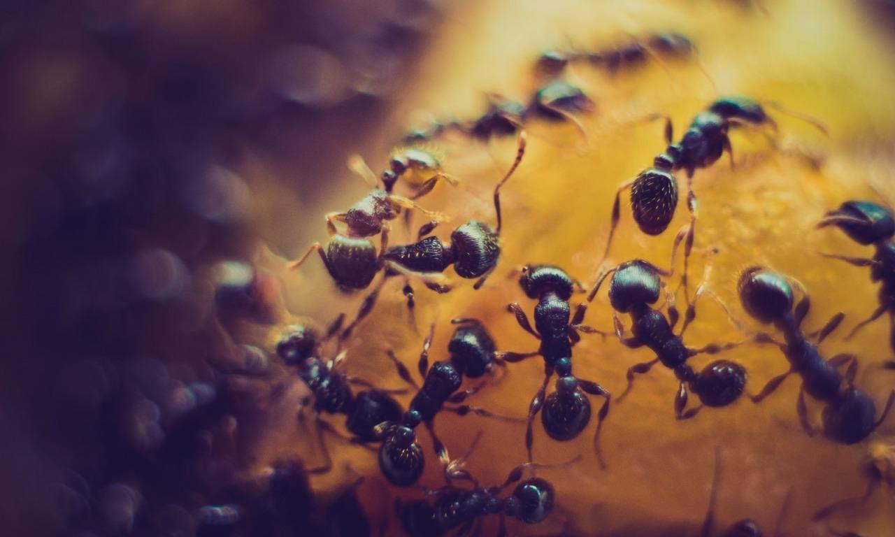 Lo schiavismo nelle formiche