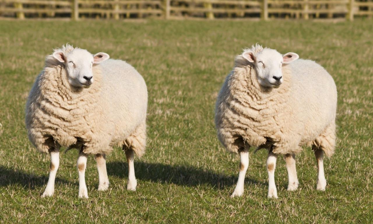 La terza via della clonazione