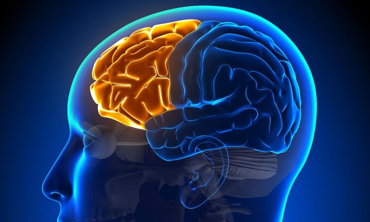 Il decennio del cervello